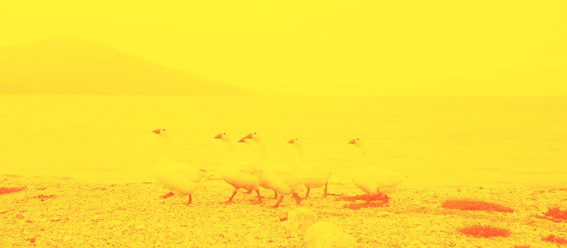 mare corto adriatico mediterraneo mole ancona